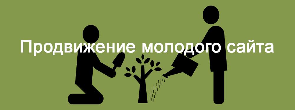 Заказать продвижение молодого сайта в Казани Частным SEO